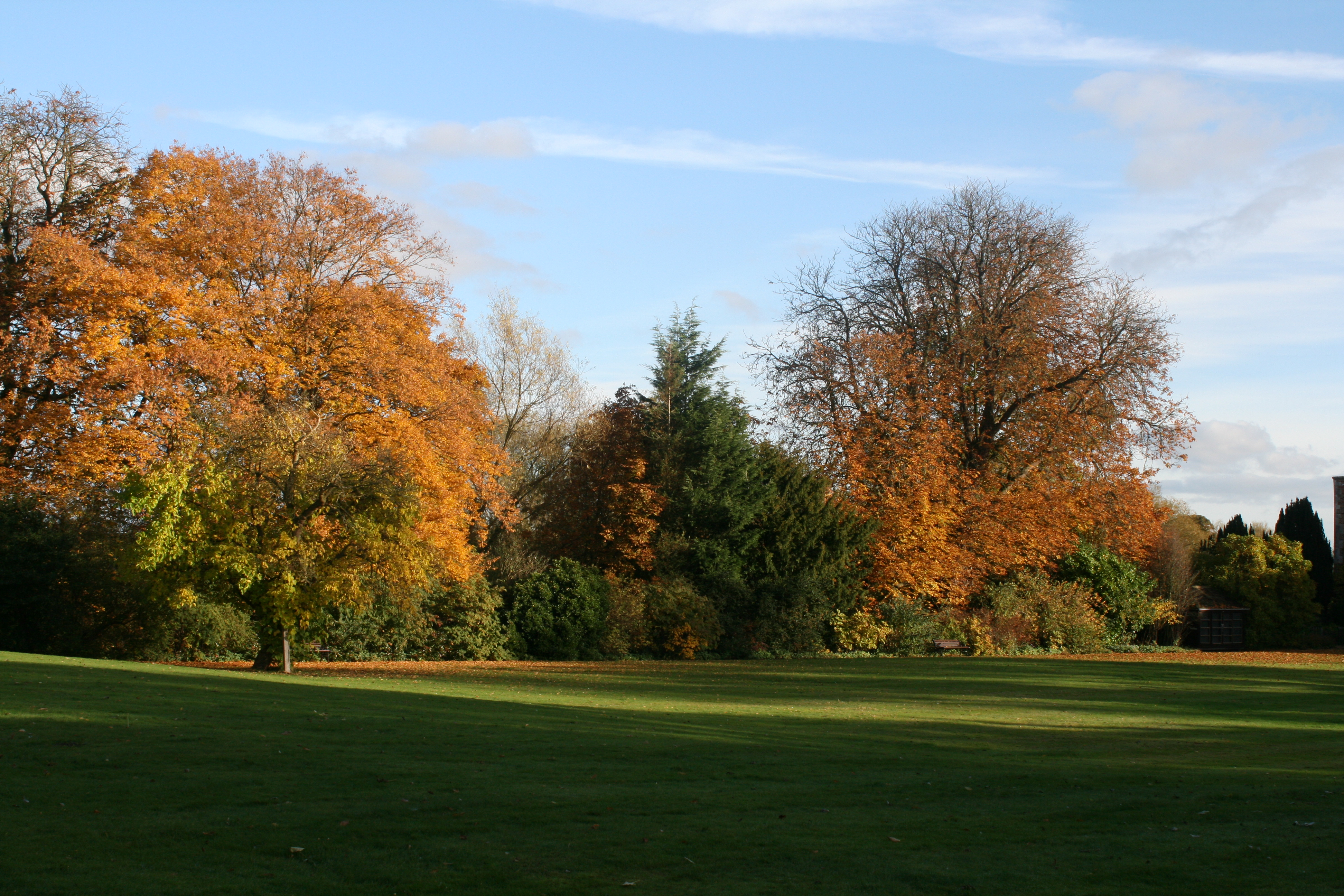 Trees in autumn with grass in the foreground