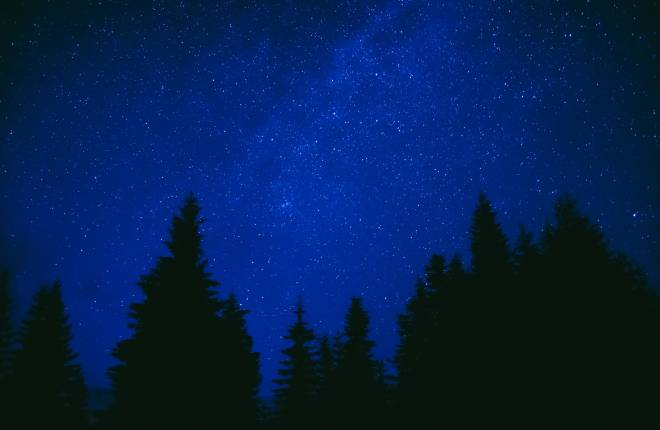 Stars against a blue sky at night with silhouettes o trees in the foreground